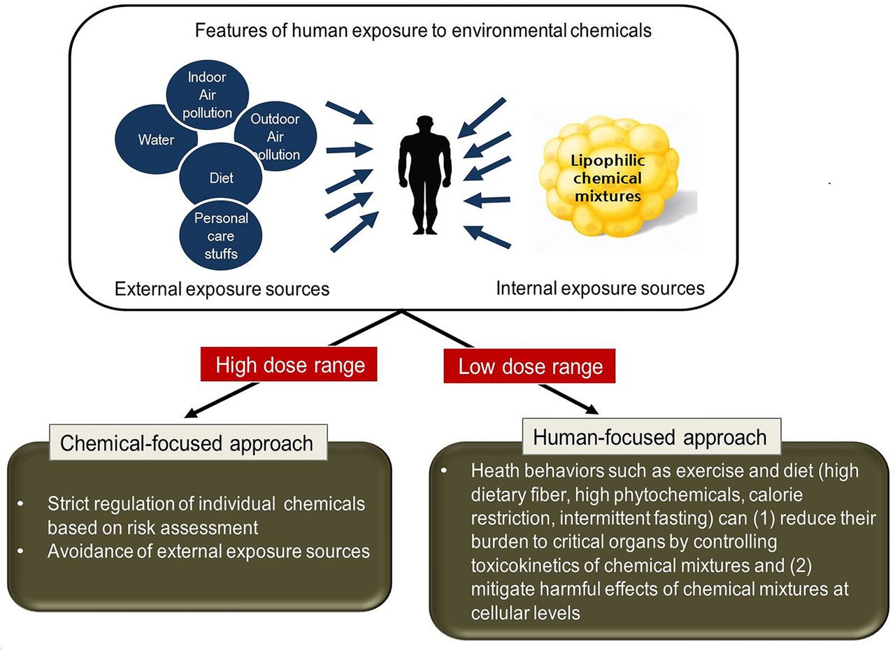 Evidence Linking Chemicals And Learning >> New Approaches To Cope With Possible Harms Of Low Dose