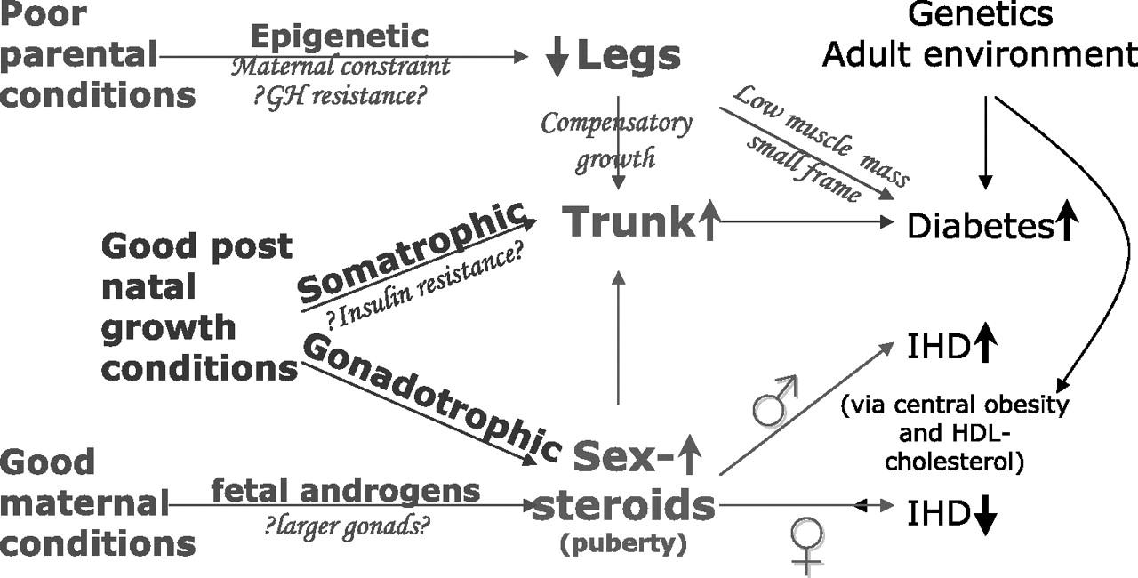 Short essay on Human Circulatory System